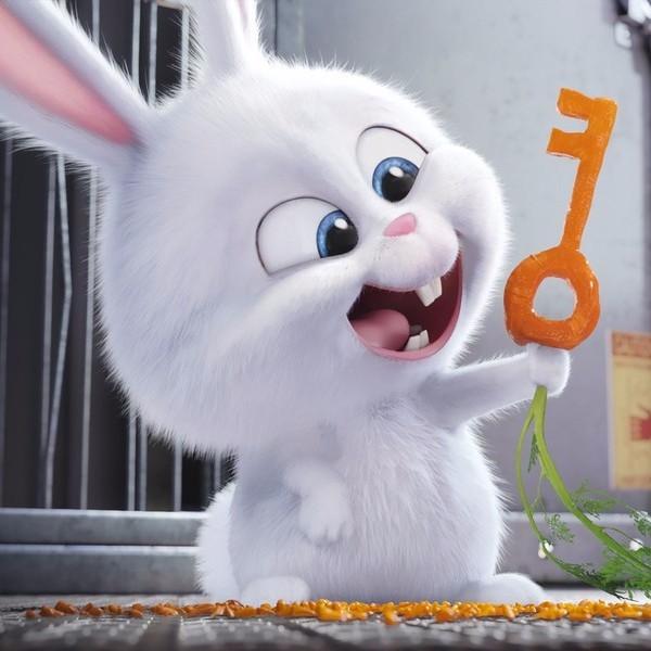 兔兔搜图-微信小程序