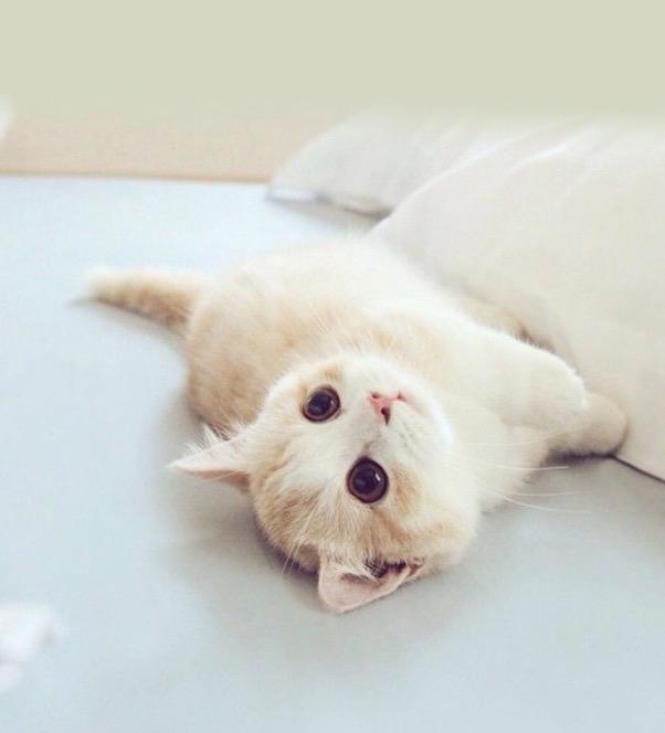 宠物家app微信小程序