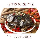 九江鄱阳湖野生甲鱼微信小程序