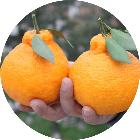 四川丑柑水果商城微信小程序