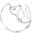 素描静物素描教程入门彩铅水彩画