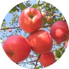 丑苹果v-微信小程序
