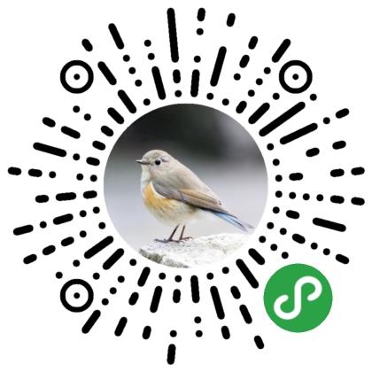 懂鸟-微信小程序二维码