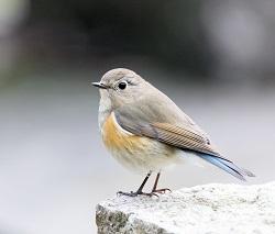 懂鸟-微信小程序